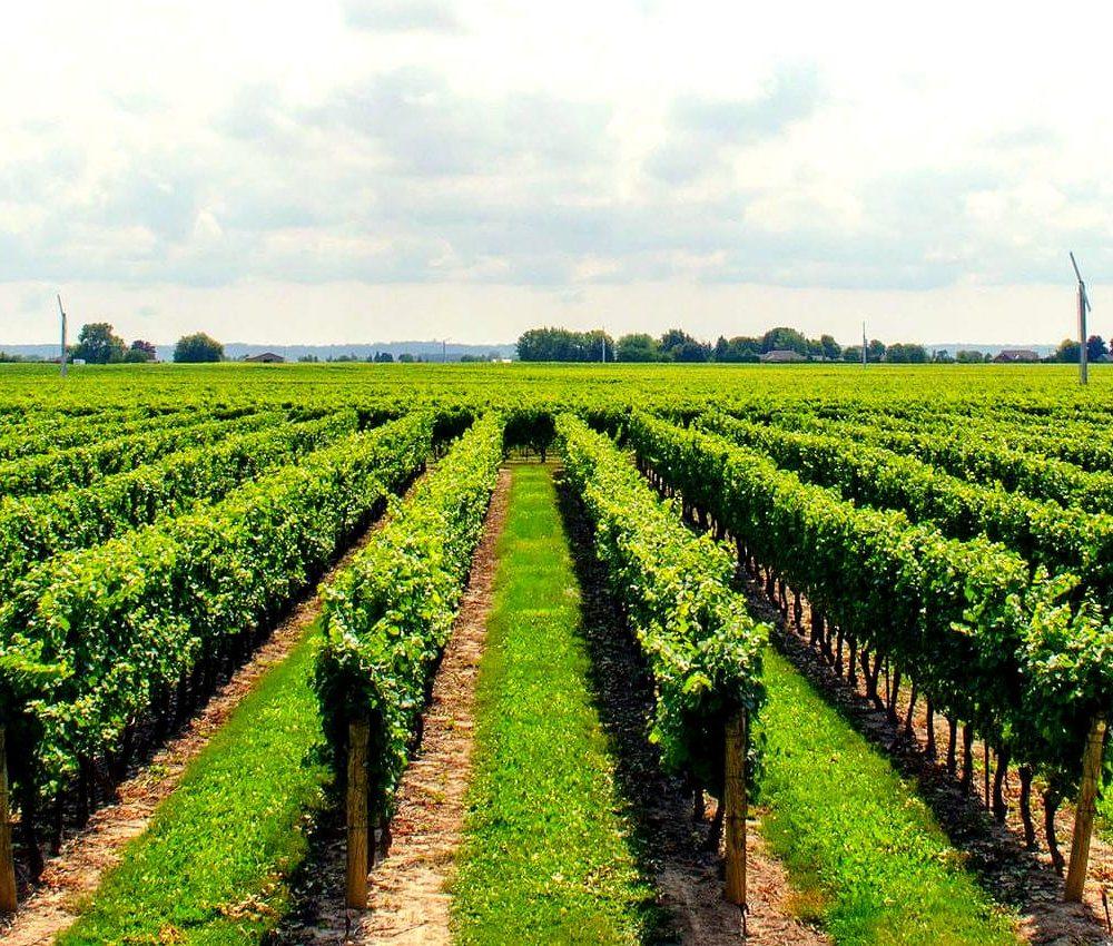 winetourpagev3